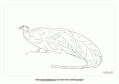 crested-argus-coloring-page
