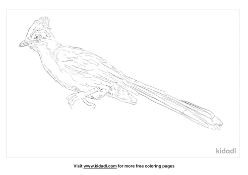 crested-coua-coloring-page