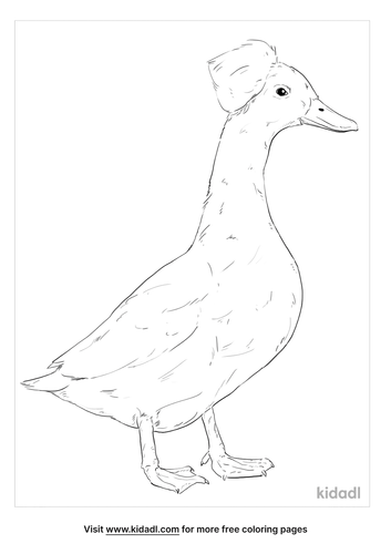 crested-duck-coloring-page