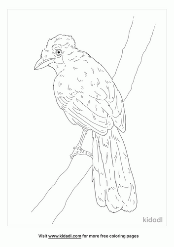 crested-jay-coloring-page