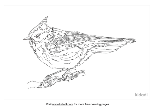 crested-tit-coloring-page