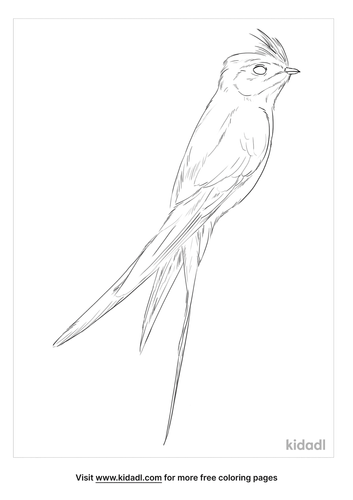 crested-treeswift-coloring-page
