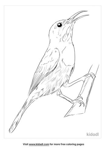 crimson-sunbird-coloring-page