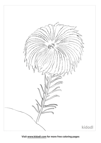 crinoid-coloring-page