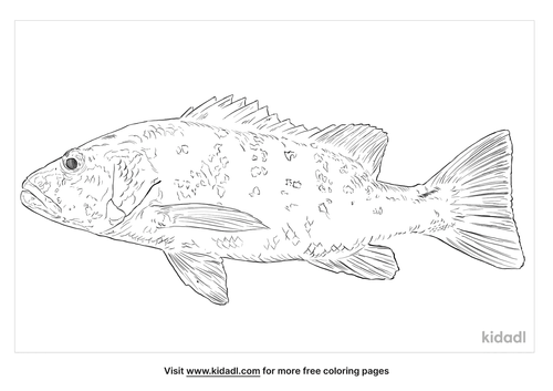 cubera-snapper-coloring-page