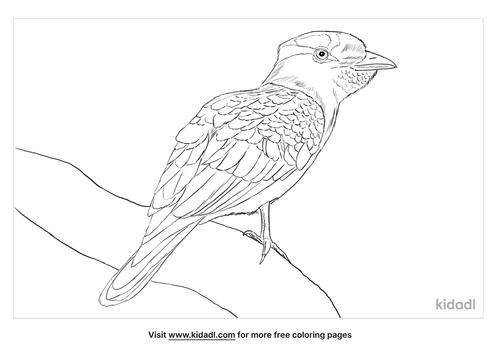 cuckoo-roller-coloring-page