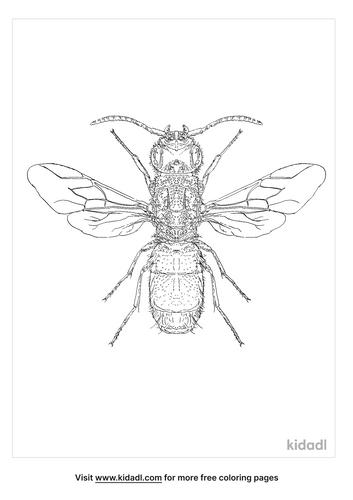 cuckoo-wasp-coloring-page