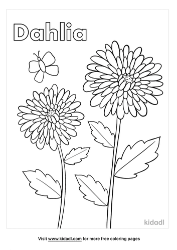 dahlia coloring page-2-lg.png