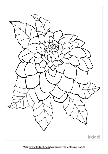 dahlia coloring page-4-lg.png