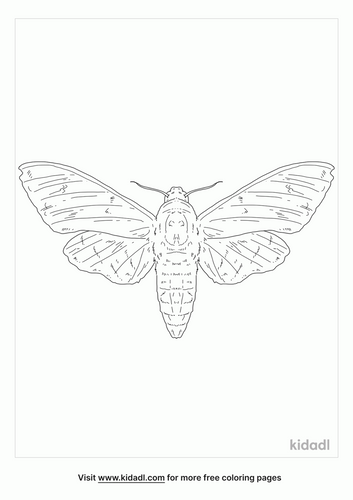 deaths-head-hawkmoth-coloring-page