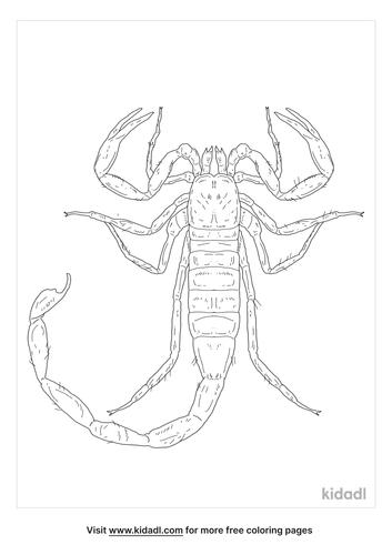 deathstalker-scorpion-coloring-page