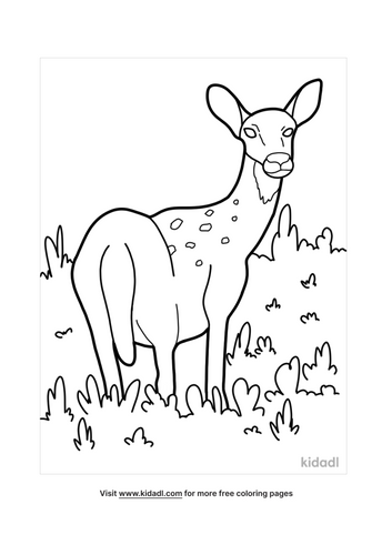 deer coloring pages-2-lg.png