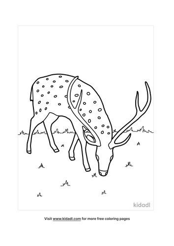deer coloring pages-4-lg.png