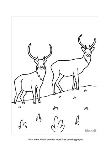 deer coloring pages-5-lg.png