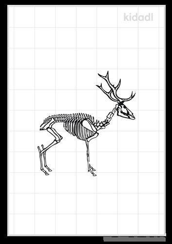 deer-skeleton-standing-stencil.png