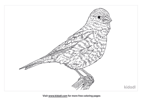 desert-finch-coloring-page