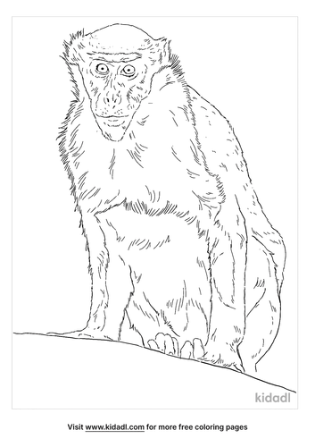 diana-monkey-coloring-page