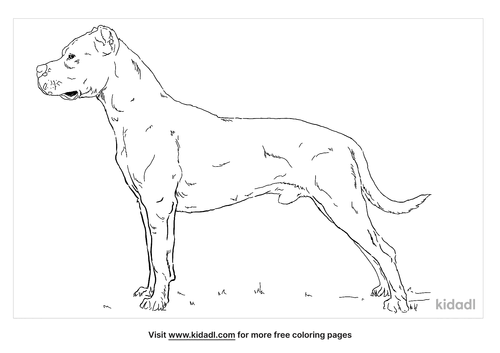 dogo-argentino-coloring-page