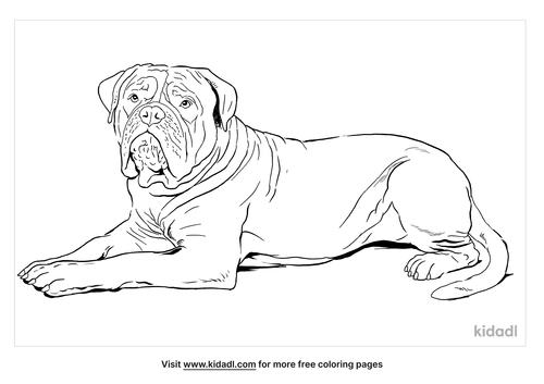 dogue-de-bordeaux-coloring-page