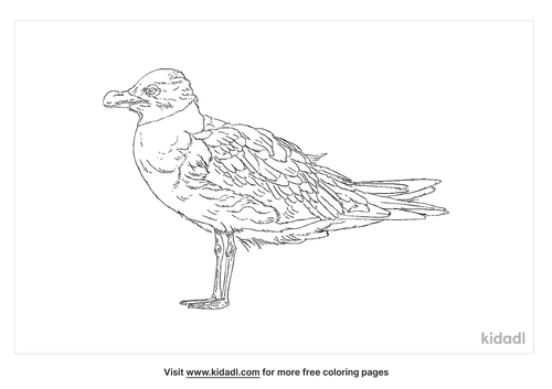 dolphin-gull-coloring-page