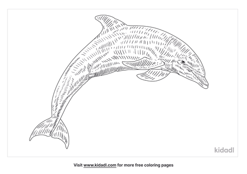 dolphins-coloring-page
