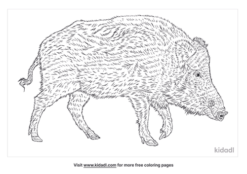 domestic-pig-coloring-page