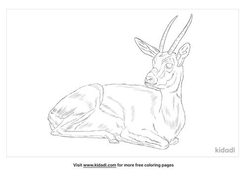 dorcas-gazelle-coloring-page