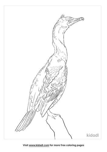 double-crested-cormorant-coloring-page
