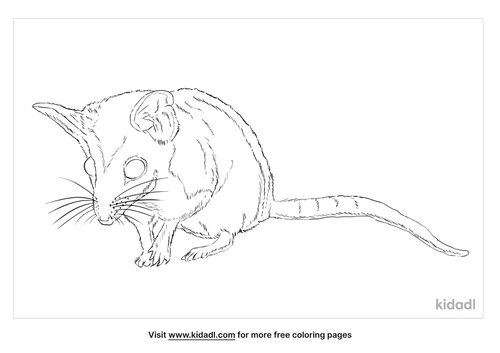 dunnart-coloring-page