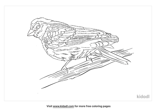 dusky-munia-coloring-page