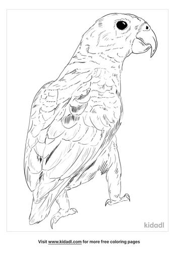 dusky-parrot-coloring-page