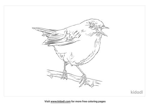 dusky-warbler-coloring-page