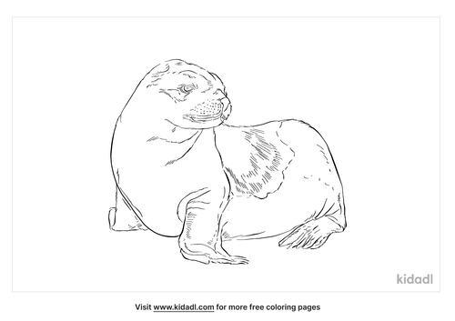 eared-seal-coloring-page