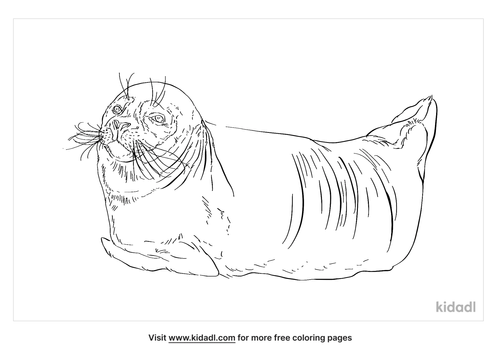 earless-seal-coloring-page