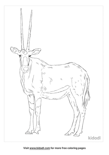 east-african-oryx-coloring-page