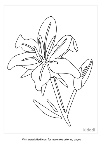 easter-lily-coloring-page-1-png.png