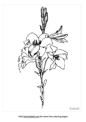 easter-lily-coloring-page-2-png.png