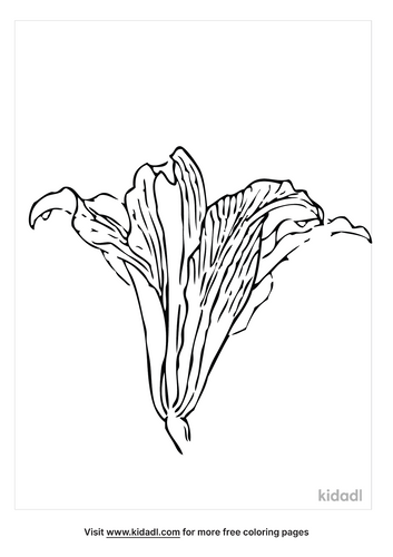 easter-lily-coloring-page-5-png.png