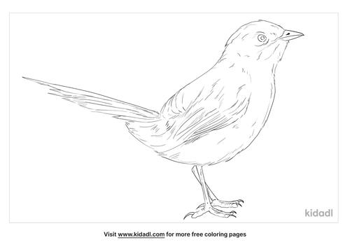 eastern-bristlebird-coloring-page