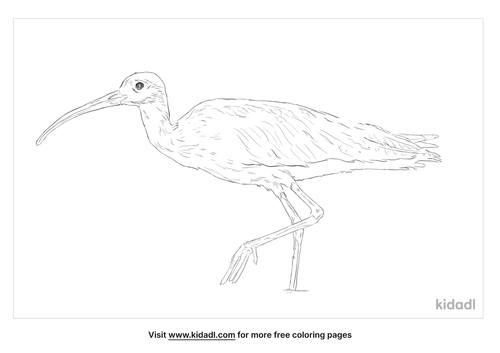 eastern-curlew-coloring-page