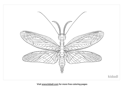 eastern-dobsonfly-coloring-page