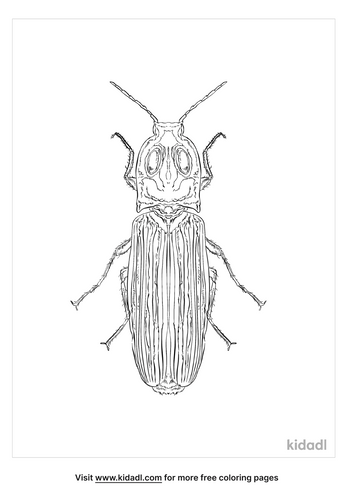 eastern-eyed-click-beetle-coloring-page