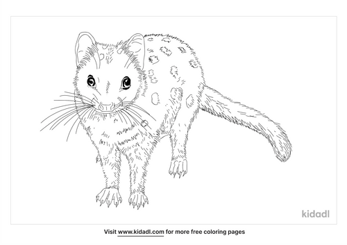 eastern-quoll-coloring-page