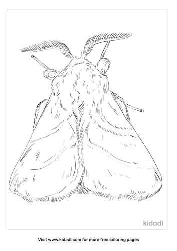 eastern-tent-caterpillar-coloring-page