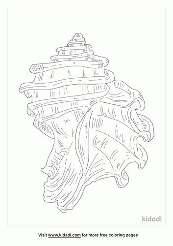 ecphora-coloring-page