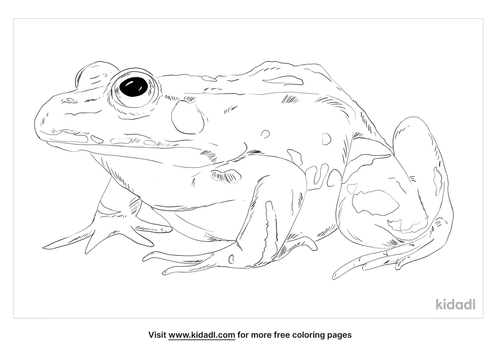 edible-frog-coloring-page
