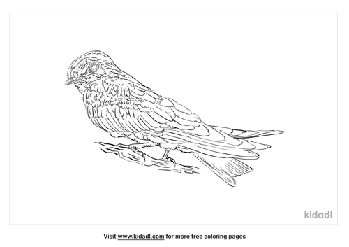 edible-nest-swiftlet-coloring-page
