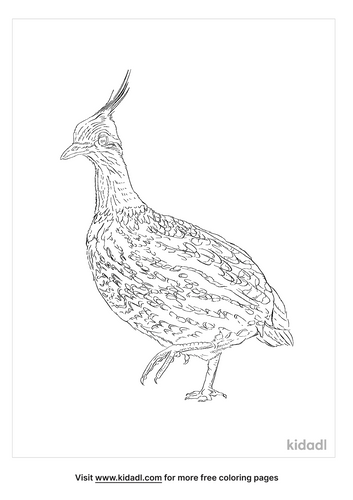 elegant-crested-tinamou-coloring-page