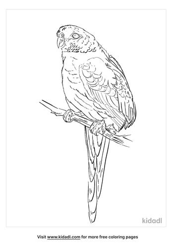 elegant-parrot-coloring-page
