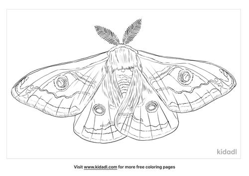 emperor-moth-coloring-page